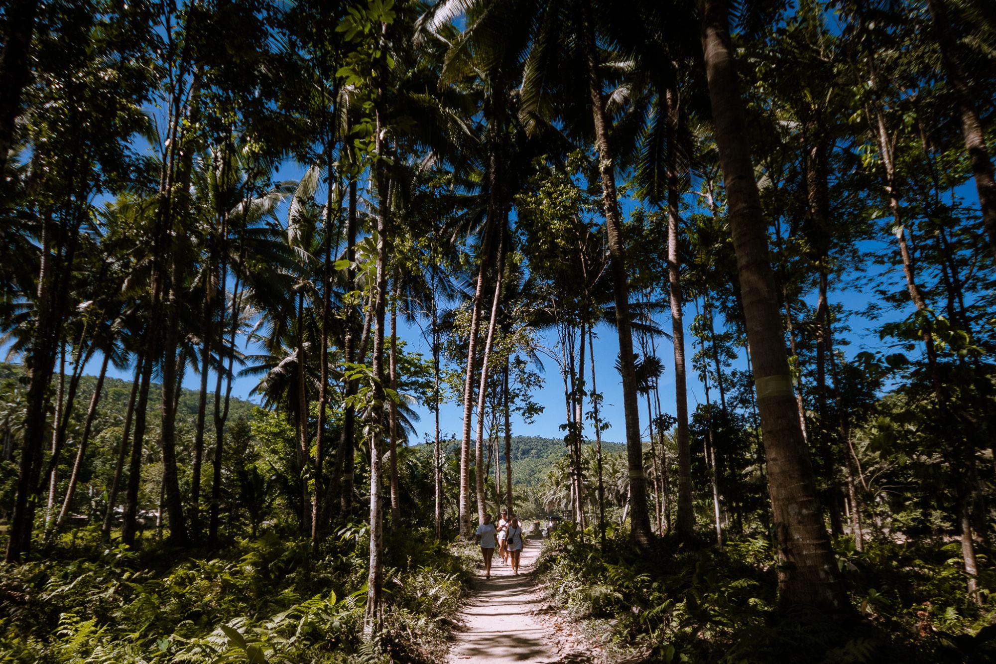 smuk natur og kokosnødder