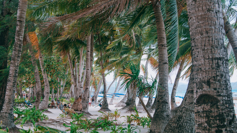palmer og sandstrand i verdensklasse