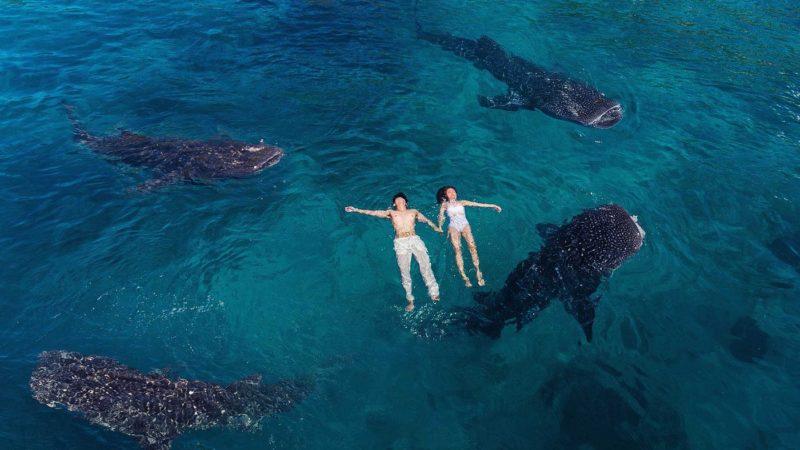 influencers lever i stor stil af at føre dig bag lyset og vise et usandt billede af oslob hvalhaj oplevelse