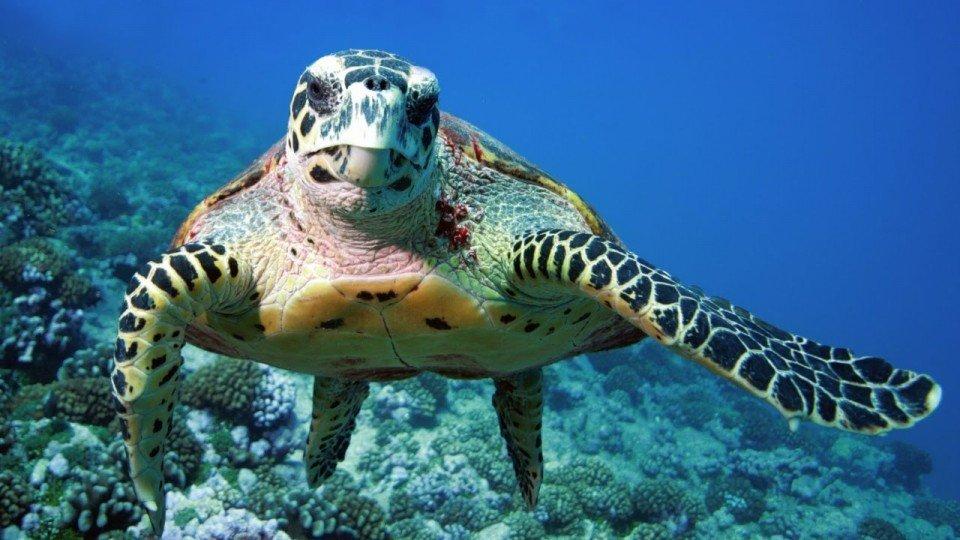 Se havskildpadder på din rejse til filippinerne